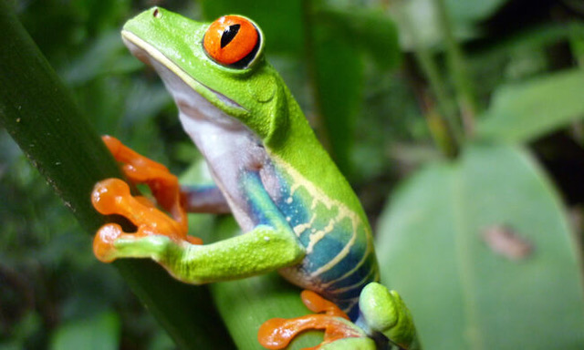 Costa Rica Tours Packages
